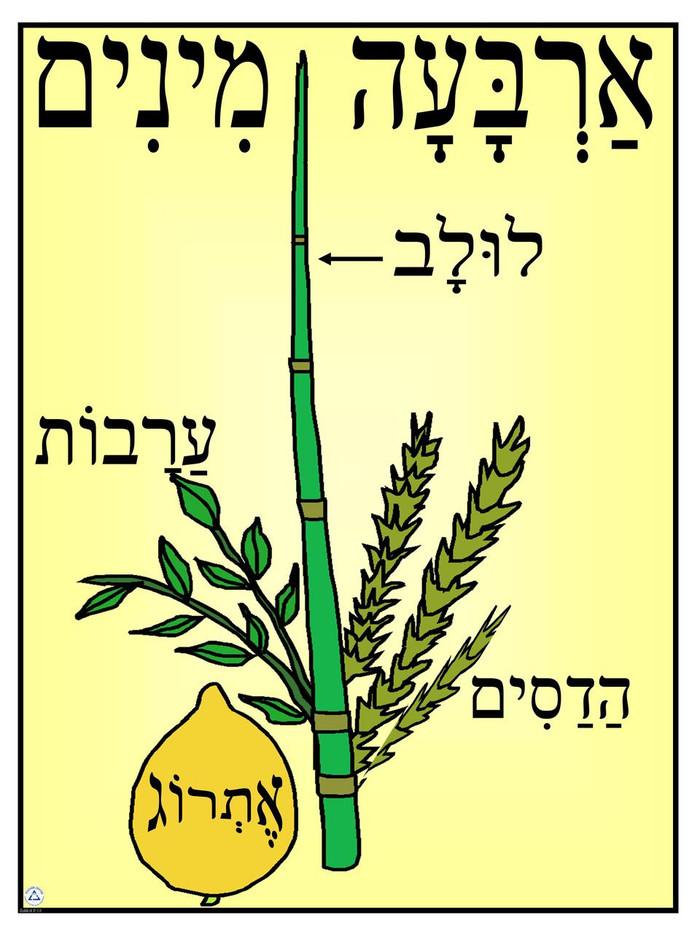 Arbah Minim (Four Species) Poster