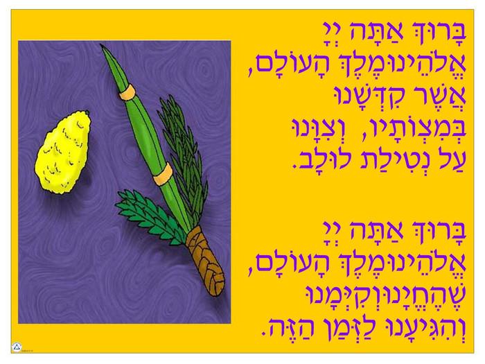 Lulav Brachot Poster