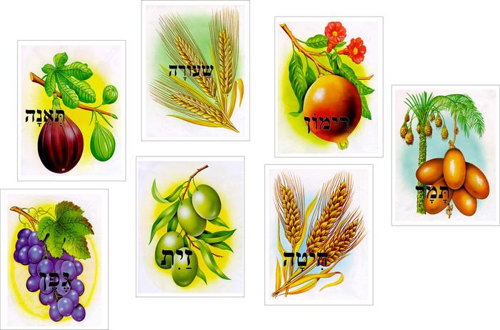 7 Species Cards