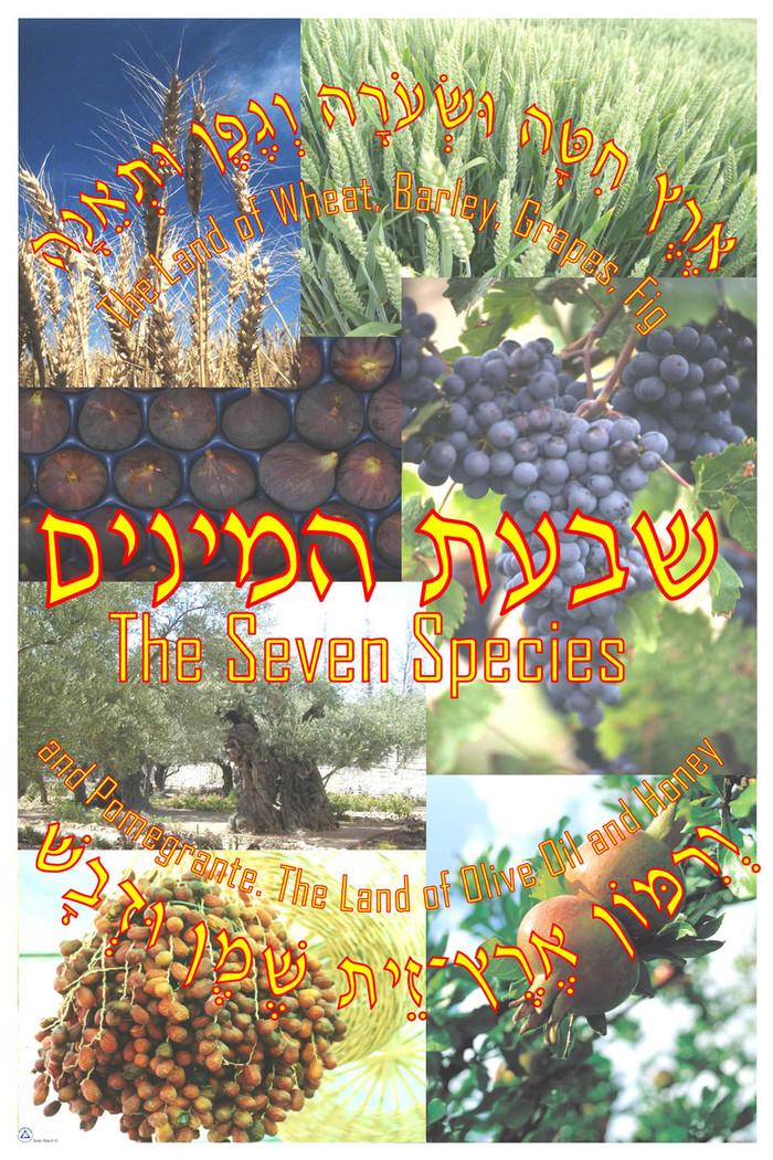 Eretz Chita Poster