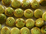Round Tabular 15mm - Glazed Lime Porcelain Beads (PO368)