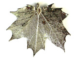 Sugar Maple Leaf Pendant - Platinum (LF197)