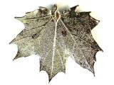 Sugar Maple Leaf Pendant - Platinum (LF197)