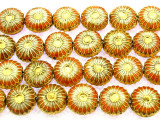 Cloisonne Beads - Peach & Gold Coin 8mm(CS262)