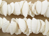 Clam Shell Beads 22mm (SH418)