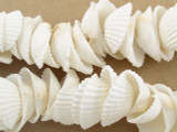 Clam Shell Beads 30mm (SH419)