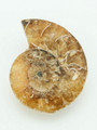 Ammonite Pendant 28mm (AM361)