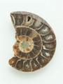 Ammonite Pendant 29mm (AM363)