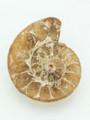 Ammonite Pendant 32mm (AM371)