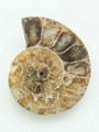 Ammonite Pendant 33mm (AM379)