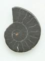 Ammonite Pendant 35mm (AM387)