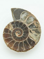 Ammonite Pendant 39mm (AM396)