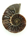 Ammonite Pendant 33mm (AM414)