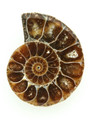 Ammonite Pendant 33mm (AM421)