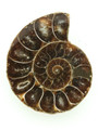 Ammonite Pendant 34mm (AM424)
