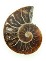 Ammonite Pendant 34mm (AM425)