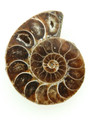 Ammonite Pendant 35mm (AM427)