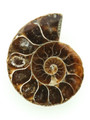 Ammonite Pendant 34mm (AM429)