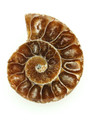 Ammonite Pendant 33mm (AM433)