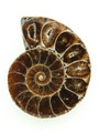 Ammonite Pendant 33mm (AM434)