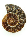 Ammonite Pendant 33mm (AM435)
