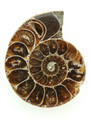 Ammonite Pendant 34mm (AM439)