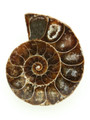 Ammonite Pendant 34mm (AM440)