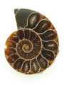 Ammonite Pendant 35mm (AM445)
