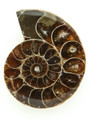 Ammonite Pendant 37mm (AM451)