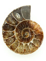 Ammonite Pendant 36mm (AM457)