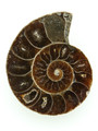 Ammonite Pendant 37mm (AM461)