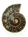 Ammonite Pendant 36mm (AM463)