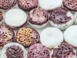 Spiny Oyster Shell Round Tabular Beads 16-22mm (SH559)