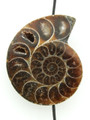 Ammonite Pendant 35mm (AM483)