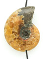 Whole Ammonite Pendant 34mm (AM489)