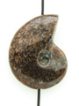 Whole Ammonite Pendant 27mm (AM504)