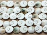 Shiva Eye Round Shell Beads 14mm (SH562)