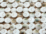 Shiva Eye Round Shell Beads 12mm (SH564)