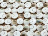 Shiva Eye Round Shell Beads 12mm (SH564)