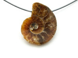 Ammonite Pendant 21mm (AM517)