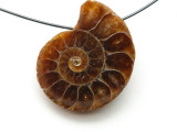 Ammonite Pendant 26mm (AM518)