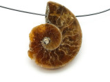 Ammonite Pendant 30mm (AM519)