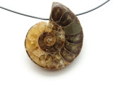 Ammonite Pendant 28mm (AM520)