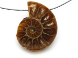 Ammonite Pendant 30mm (AM521)