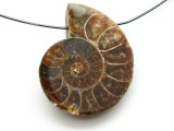 Ammonite Pendant 31mm (AM522)