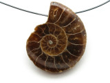 Ammonite Pendant 30mm (AM523)