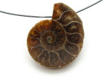 Ammonite Pendant 27mm (AM524)