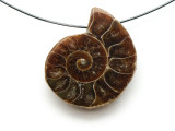Ammonite Pendant 28mm (AM525)