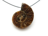 Ammonite Pendant 24mm (AM526)