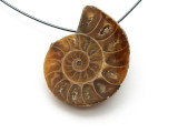 Ammonite Pendant 27mm (AM527)